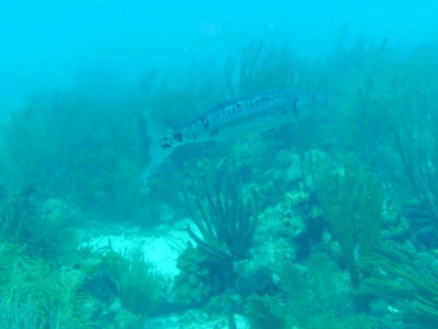 Bonaire 2011 - PICT0162.JPG