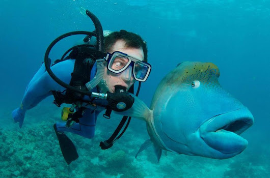 This Fish's Face is Priceless This hilarious photo was posted by Sick_Nerd_B...