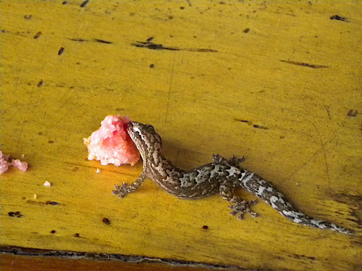 These guys were all over the place eating the sugar and any crumbs we left.