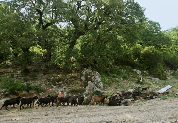 Hiking trails in south Lefkada | Lefkada Slow Guide