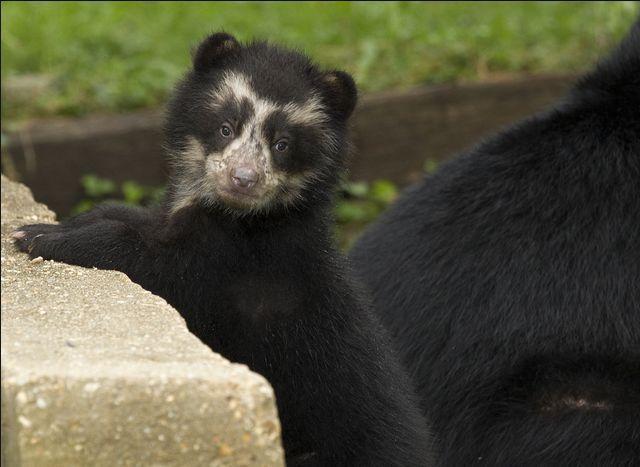 Animal Keeper: The 9 main types of Bears (main suborders)