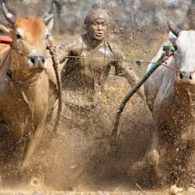 Cow Race ~ Covered by Annemarie Rulos  - People Street & Candids
