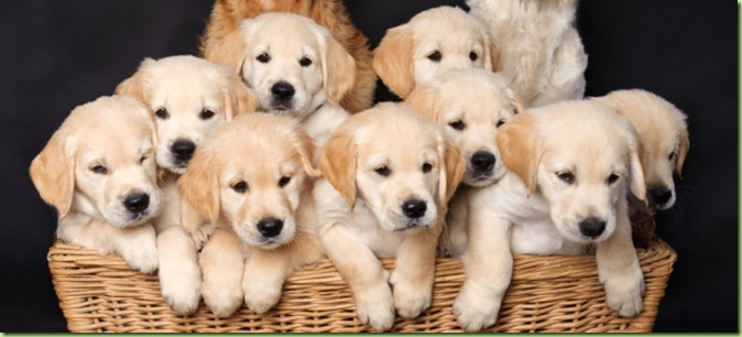 basket-of-goldens