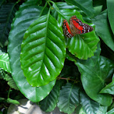 Houston Museum of Natural Science - 116_2910.JPG