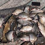 20140801_Fishing_Bochanytsia_016.jpg
