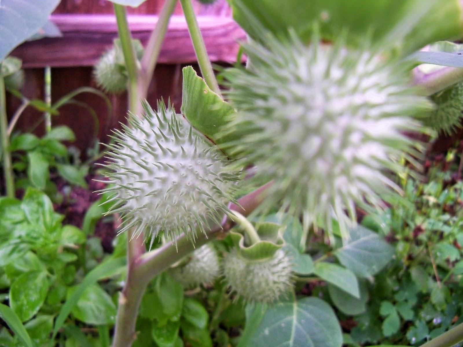Gardening 2014 - 116_2599.JPG