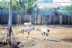 Shailesh Mankar Animal Photography