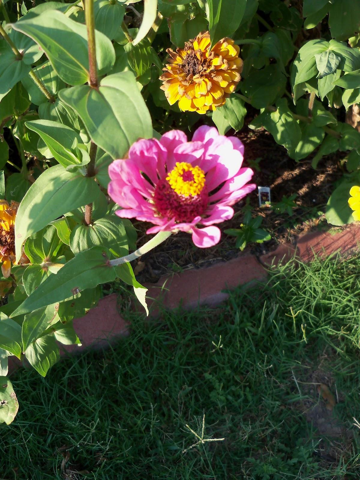 Gardening 2011 - 100_9231.JPG