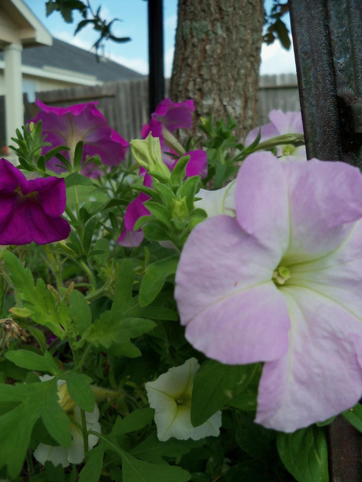 Gardening 2012 - 115_1627.JPG