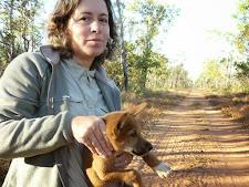 wildlife-dingo.jpg