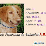 Sharon (Adoptada)
