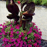 images-Seasonal Color-flowers_15.jpg