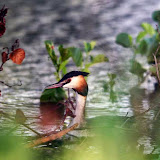 Vogels en dieren - IMG_9127.JPG