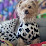 Austin Sloan's profile photo