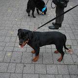 KNON-honden in Emmen - DSC_0788.JPG