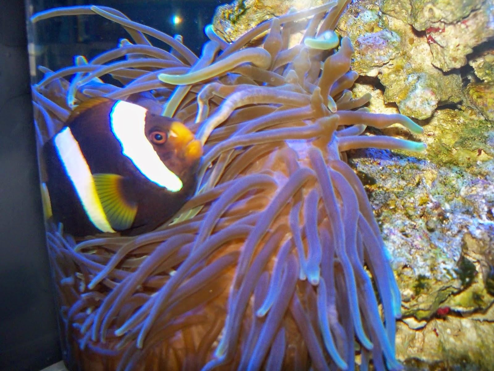 Downtown Aquarium - 116_3925.JPG