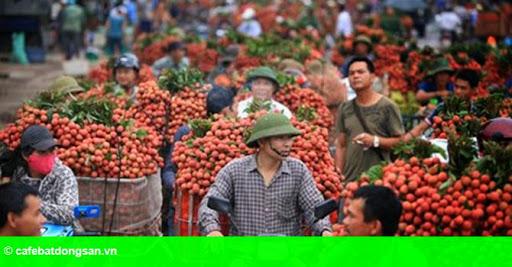 Hình 1: Sản xuất, tiêu thụ nông sản: Vẫn đùn đẩy trách nhiệm!