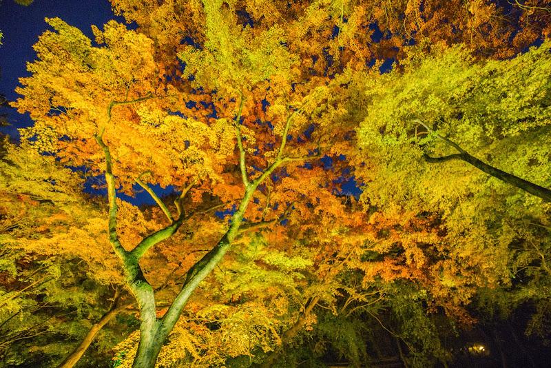 京都 紅葉 北野天満宮 ライトアップ 写真3