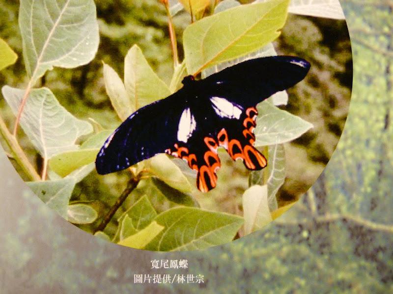 Yilan County.Taucheng , Musée Lanyang - P1230184.JPG
