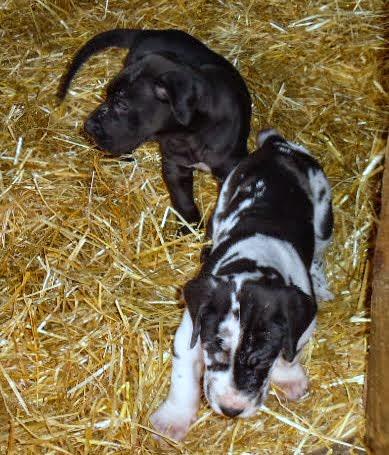 Beatrix & Winston @ 5 weeks