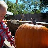 Pumpkin Patch - 115_8225.JPG