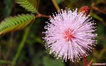 25 hình ảnh hoa cỏ dại đẹp đến mê đắm lòng người