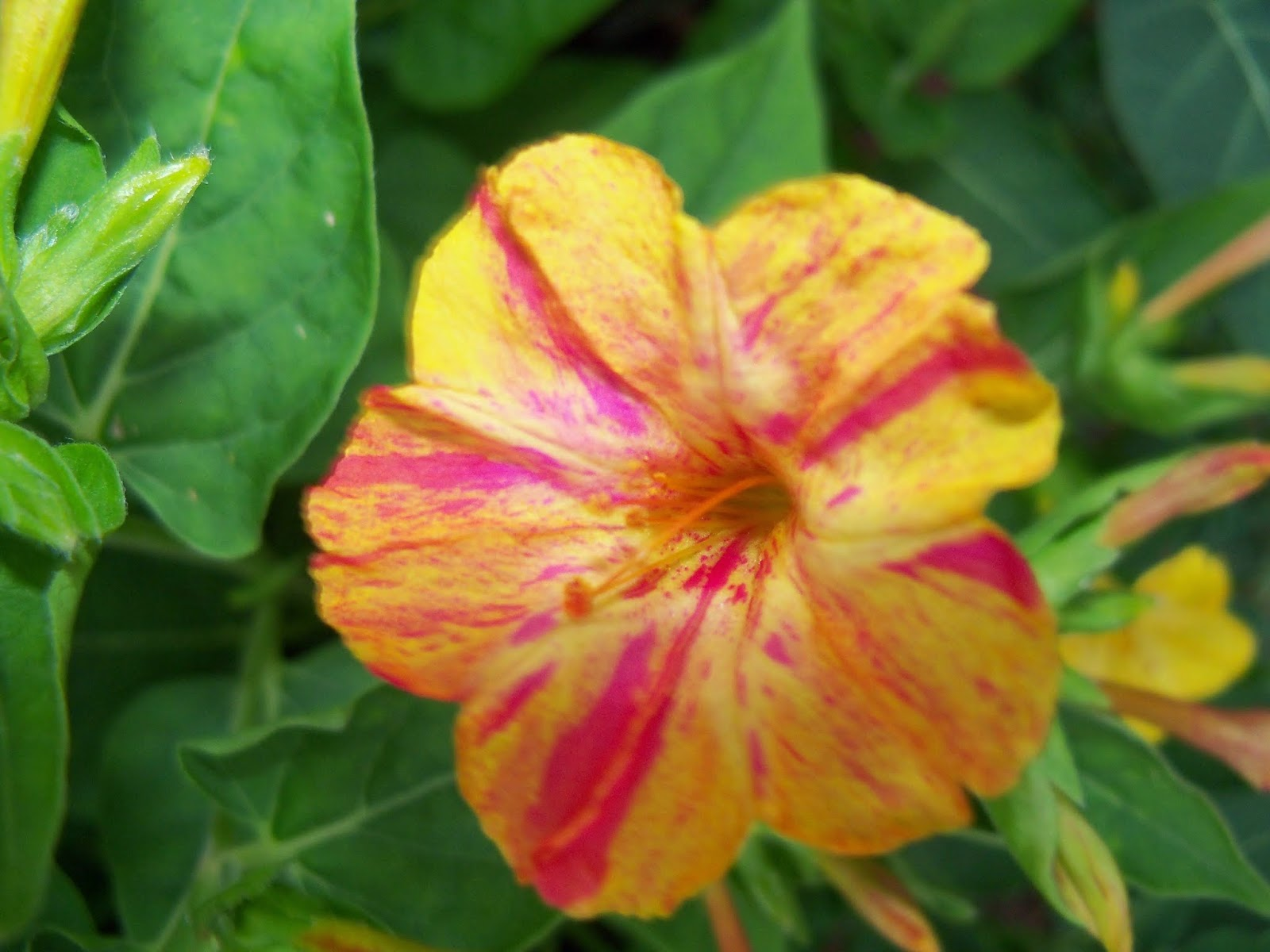 Gardening 2014 - 116_1969.JPG