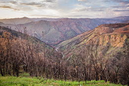 View of burned trees on H120 from Rim Fire last August