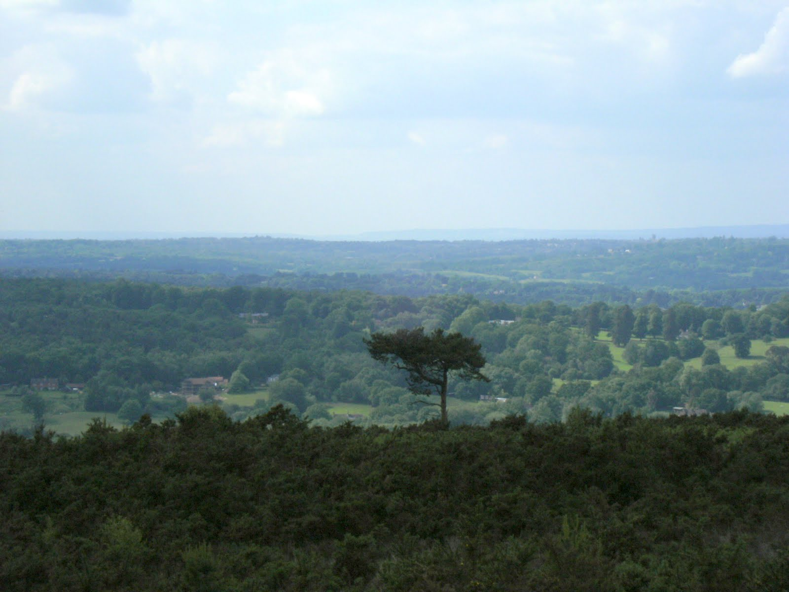 1006120049 The Lone Pine, Ashdown Forest