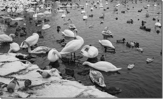 Пражский фотограф Владислав Гаус - городские пейзажи старого города