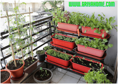 Balkon Sebagai Kebun Sayur Mini