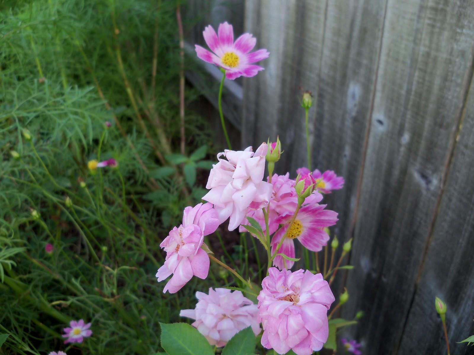 Gardening 2010, Part Three - 101_3687.JPG