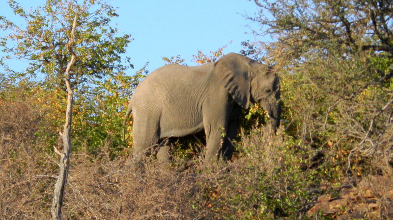 Tuli Block - elephant