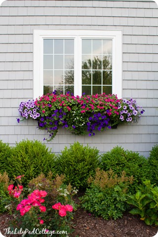 window boxes lily pad