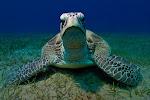 EG_Oasis_turtle2.jpg