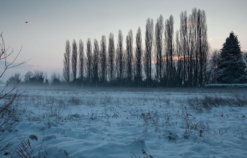 Sera d'inverno di Mauro Cestaro