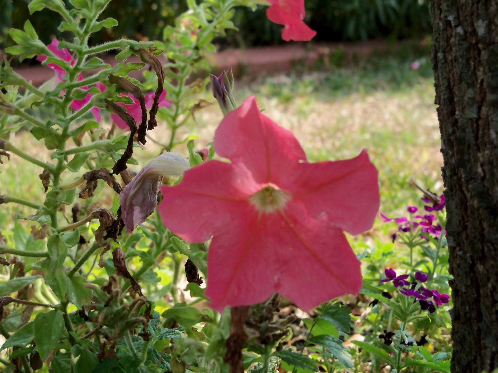 Gardening 2011 - 100_9447.JPG