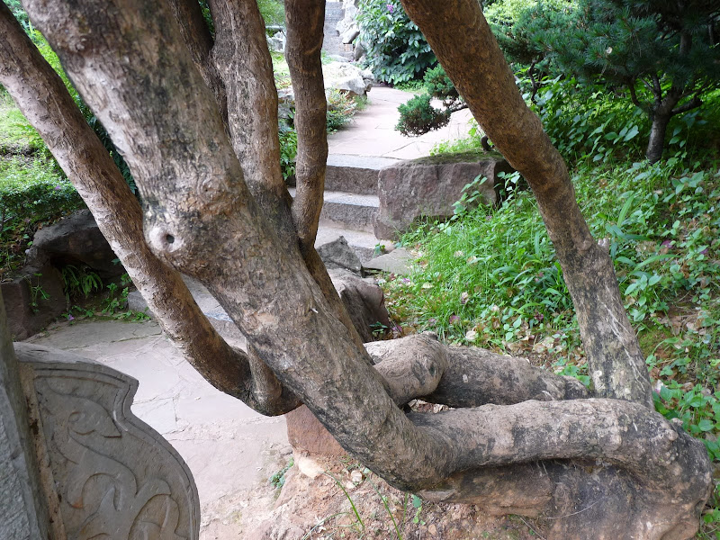 CHINE.YUNNAN.KUN MING Temple, jardin horticole,Musée des minorites - P1270316.JPG