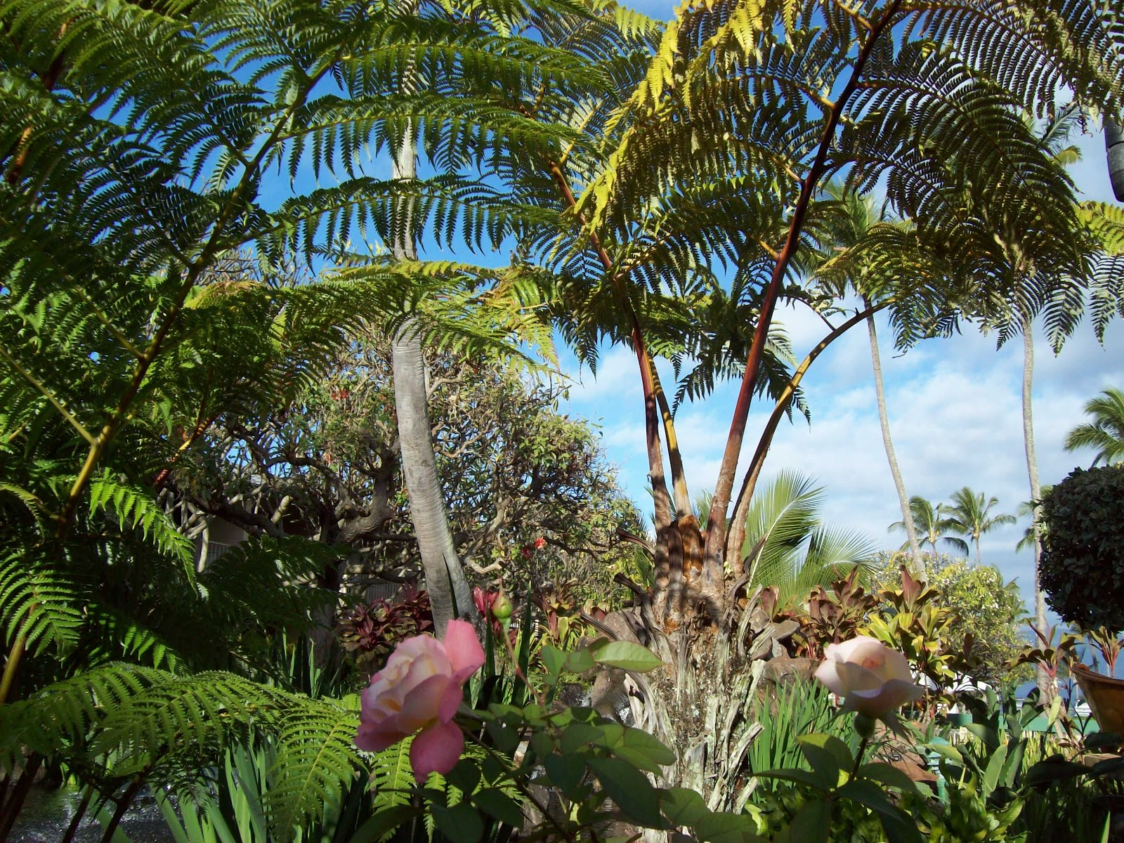 Hawaii Day 6 - 100_7613.JPG