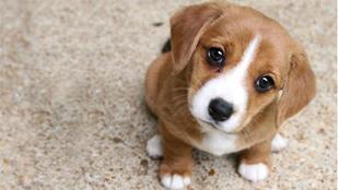 noticia-cuidados-de-mascotas
