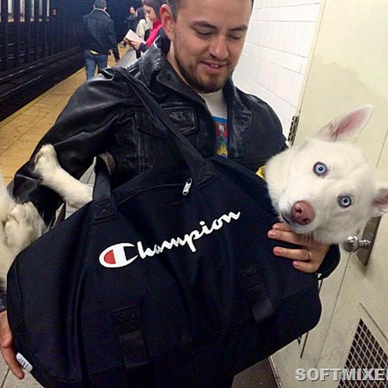 Как хитрые ньюйоркцы возят собак в метро