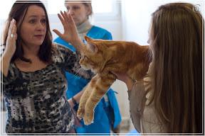 cats-show-24-03-2012-fife-spb-www.coonplanet.ru-092.jpg