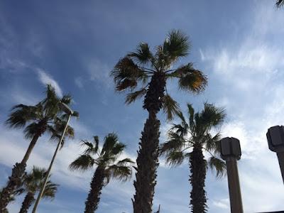 Barcelona beach palm trees