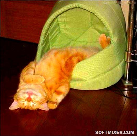 cat_fot09_thumb[2]