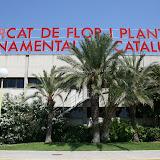 Mercat de Flor i Planta Ornamental de Catalunya - IMG_6311.JPG