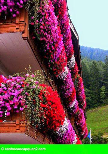 Hình 8: Ban công nhỏ rực rỡ hoa lá