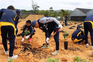 国産コーヒー豆の大規模な栽培を目指す産学官連携 「沖縄コーヒープロジェクト」 とは