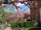 Spring blooms on Atkinson Street