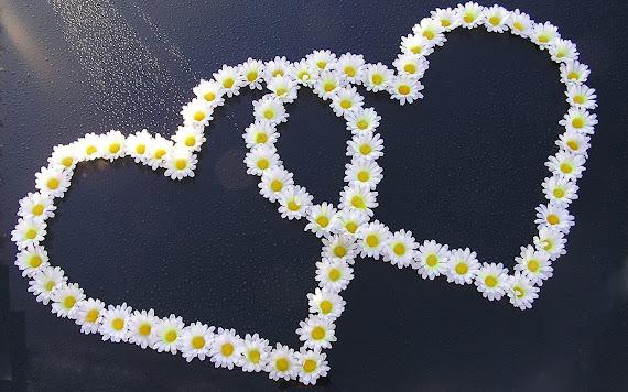 Valentinovo besplatne ljubavne slike čestitke pozadine za desktop 1680x1050 free download Valentines day 14 veljača cvijeće
