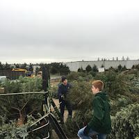 Christmas Tree Pickup - January 2017 - IMG_7005.JPG